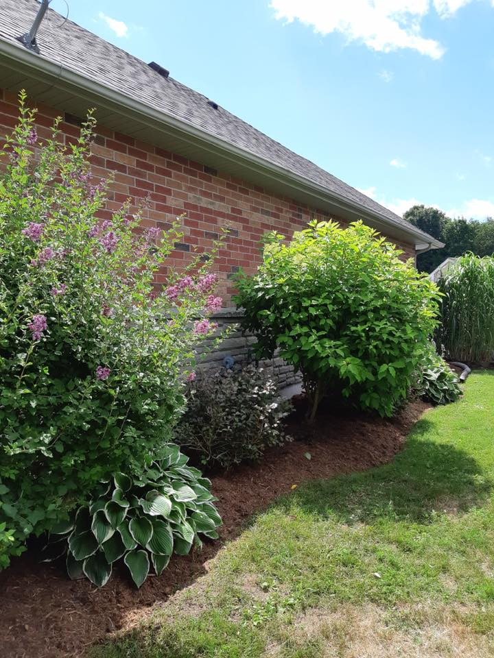 After weeding and mulch